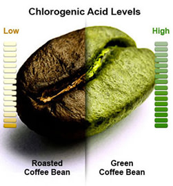 green coffee bean vs brown