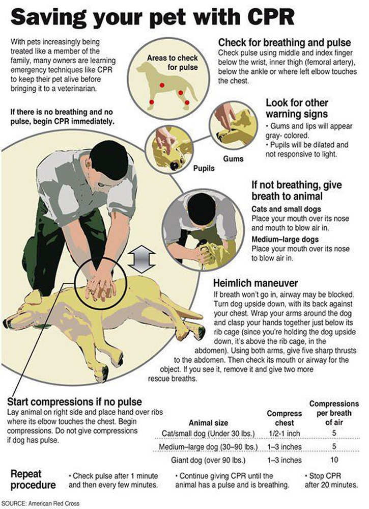 14 Tips for Dog Owners