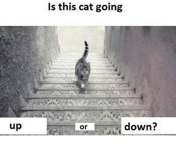cat going up or down