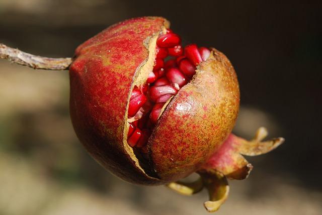 Pomegranates are healthy