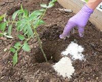 epsom salt gardening