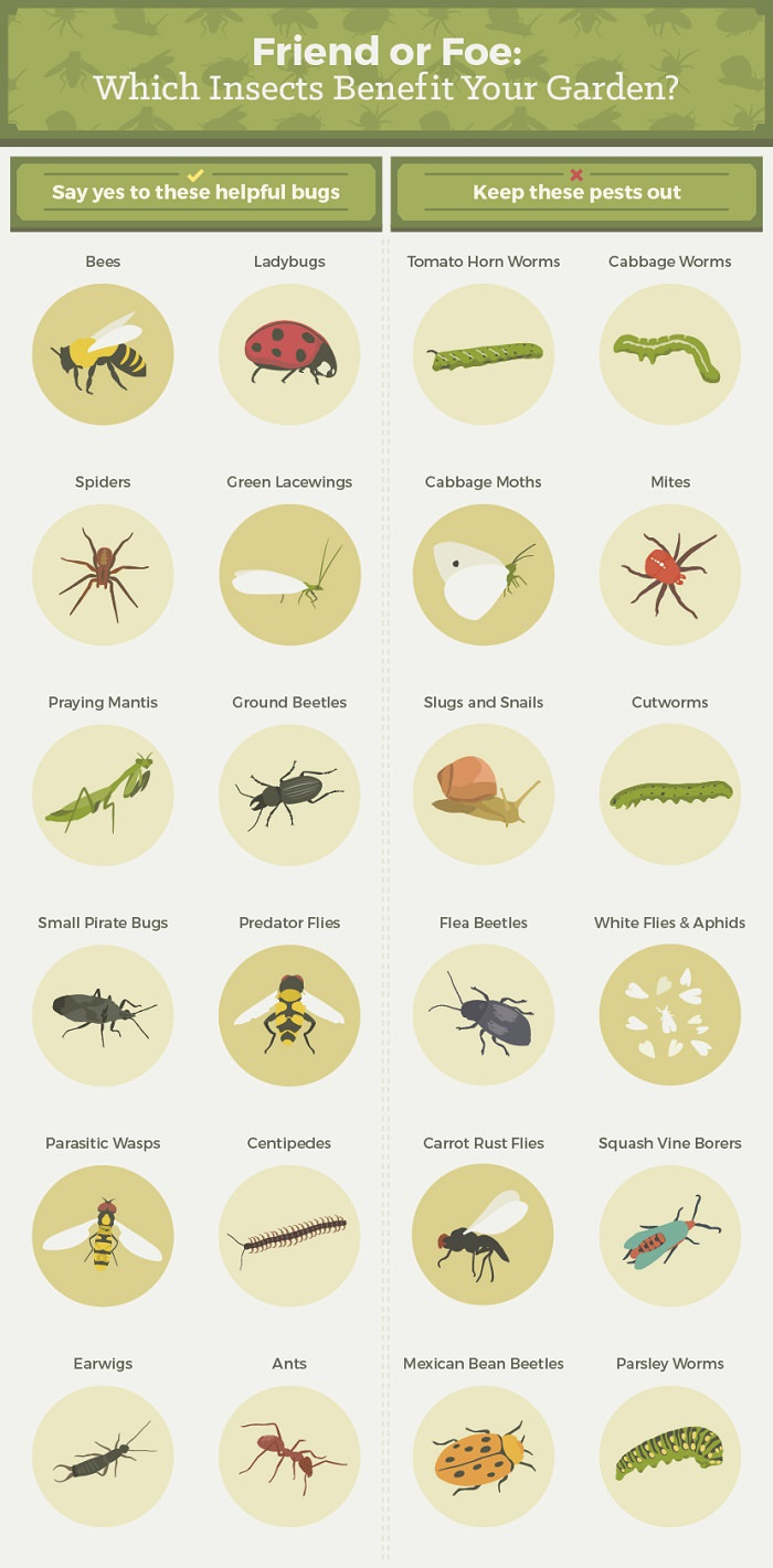 Garden Pests and Predators