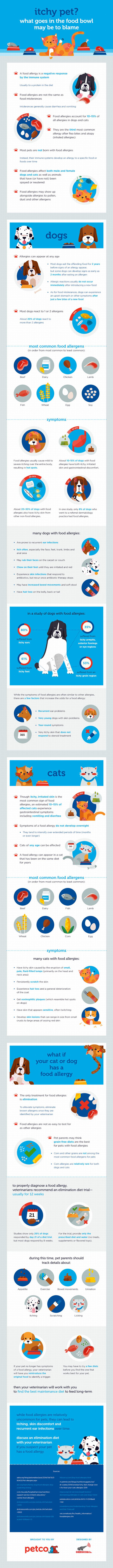 Dog Food Allergies Infographic