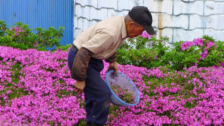 Flowers planted for a blind woman