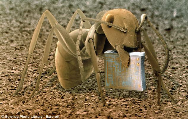 photo of ant holding a micro chip