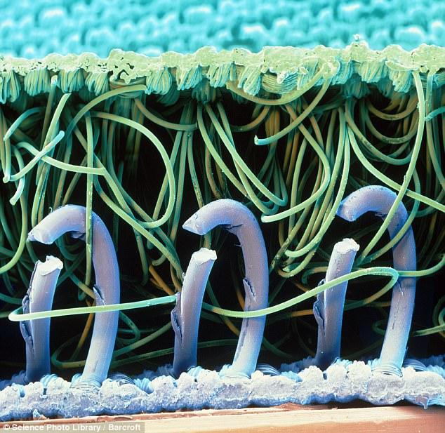 microscopic photo of nylon