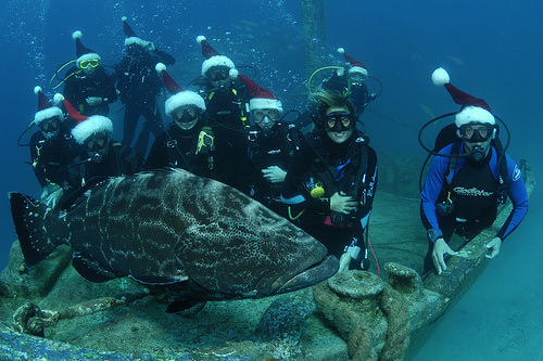 divers with a turtle
