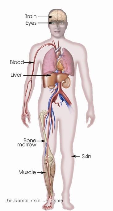 human body, organs