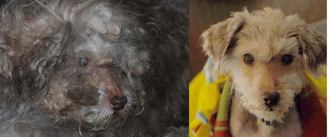 Correcting Abuse - Photos of Rescued Pets!