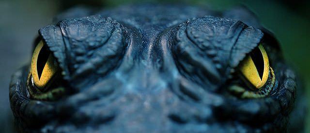 close up animal photos