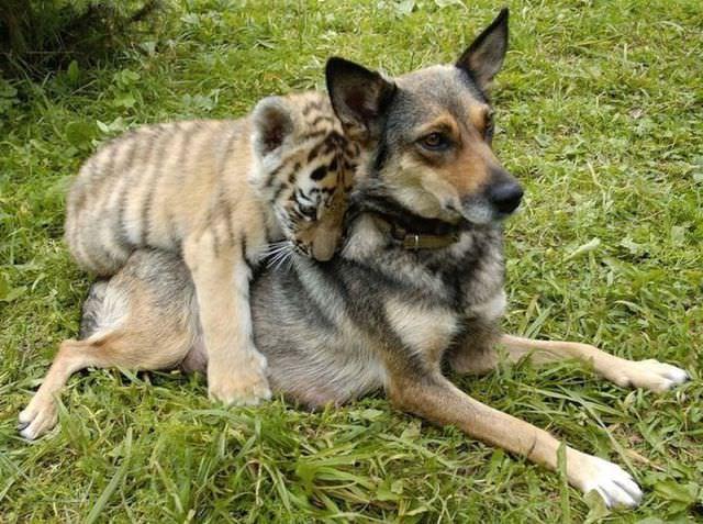 beautiful animal shots