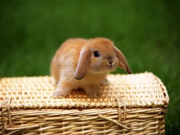 animals in baskets