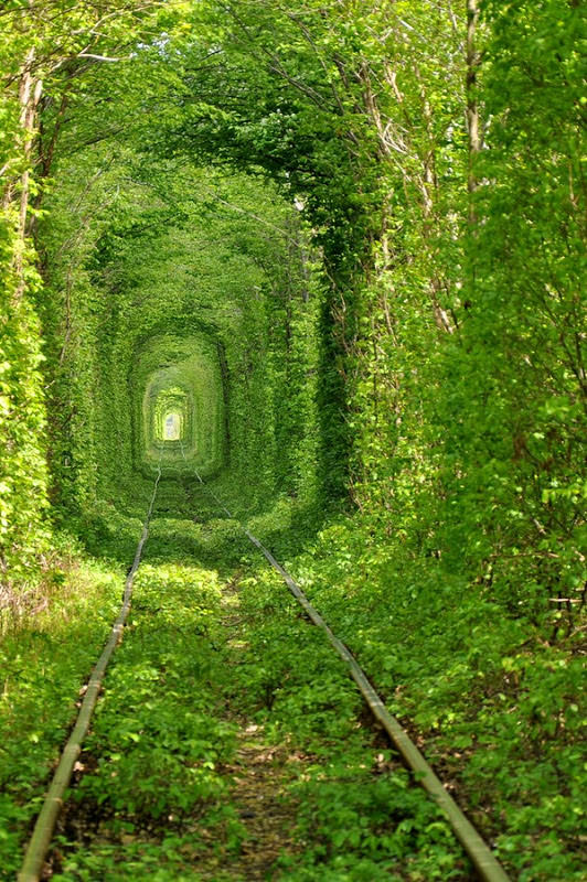 The Tunnel of Love - Beautiful!