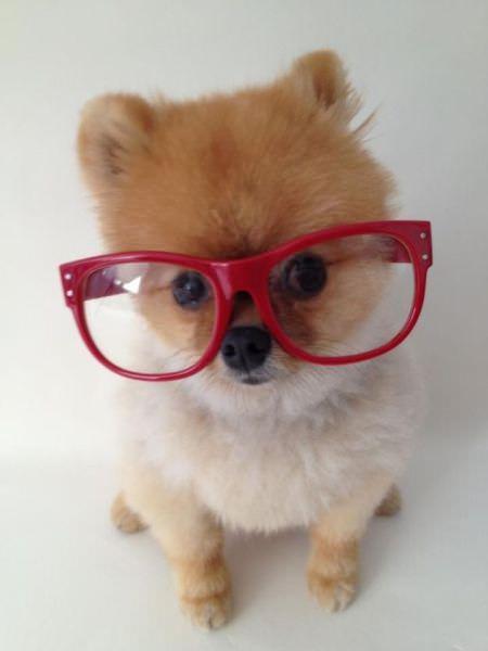 adorable animal photos