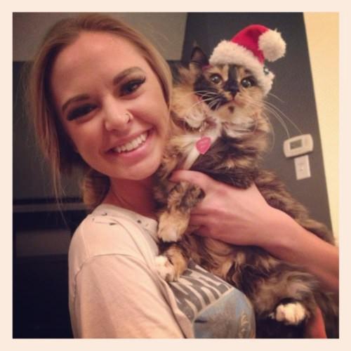 cat christmas photos