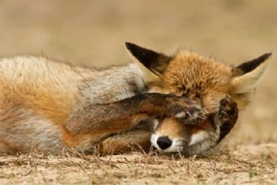animals shy photos