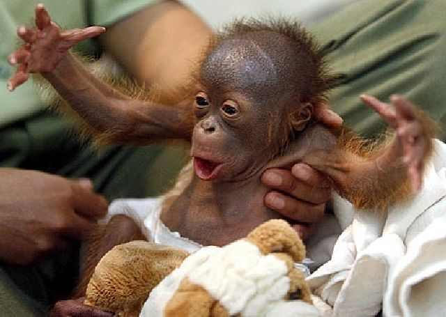 Those Darn Cute Animals!