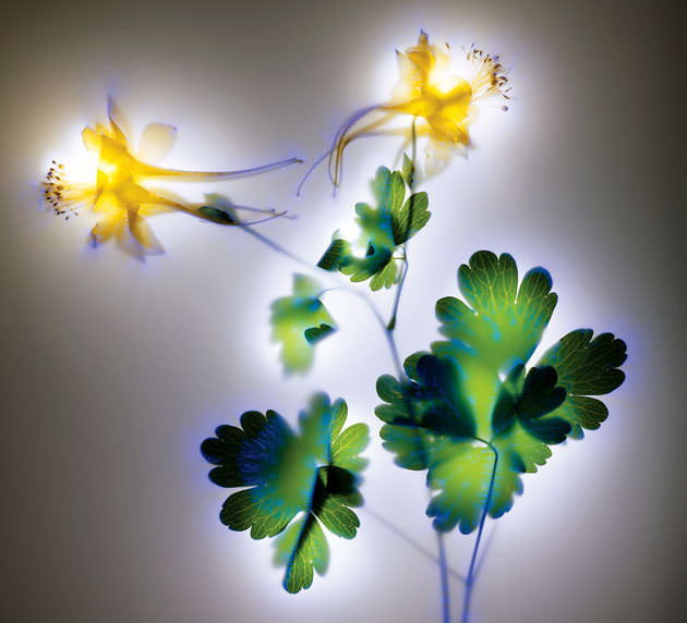electric flowers