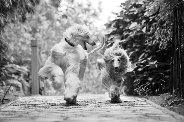 Animal funny photos