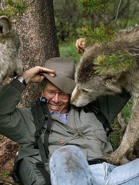 wolf photos