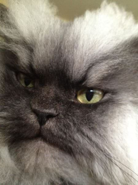 angry cat photos