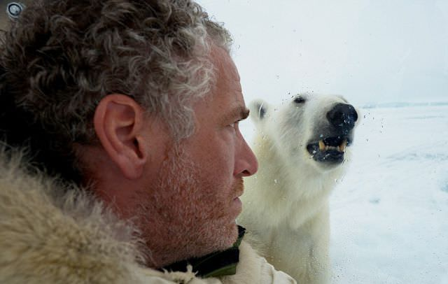 confronting a polar bear