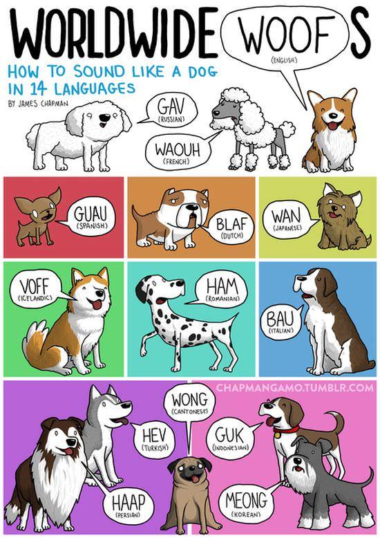 international animal sounds