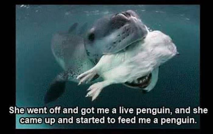 leopard seal story
