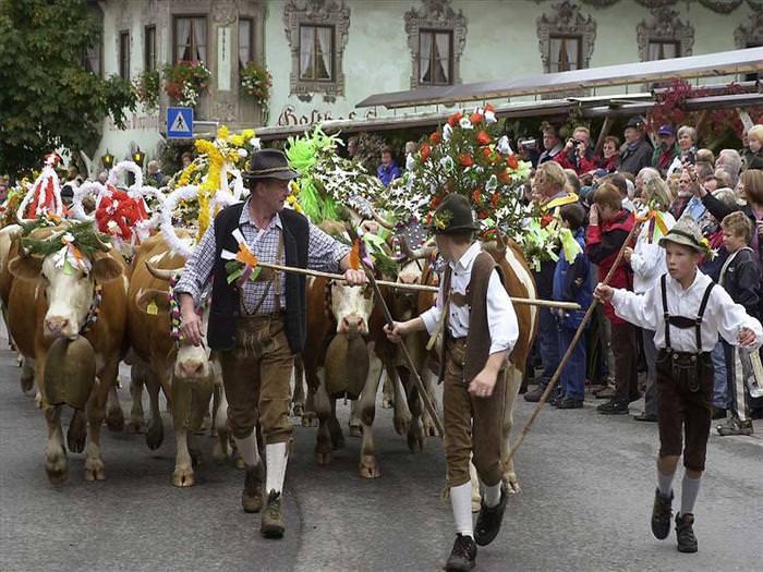 tirol cow festival
