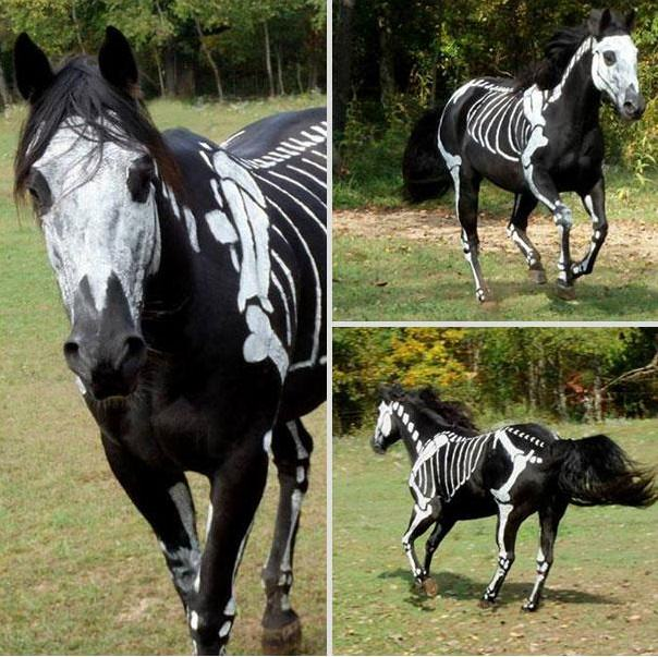 funny animal costumes