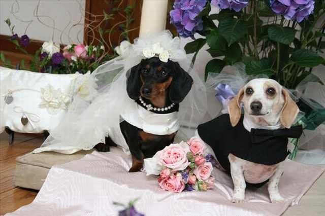 pet weddings