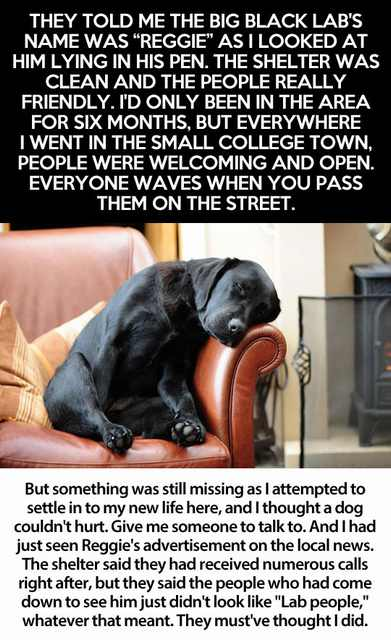 touching story dog