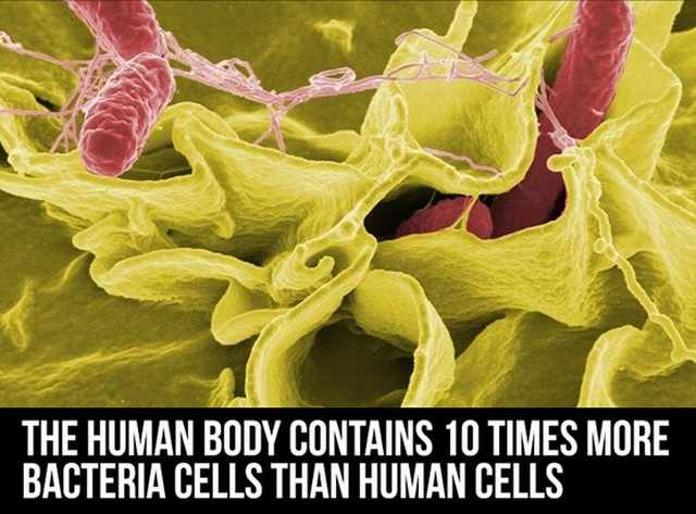 human body facts