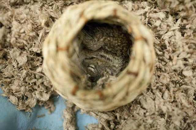 squirrel friendship