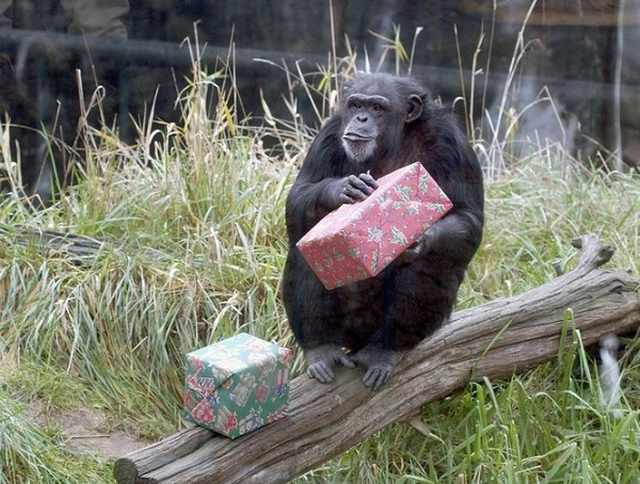 christmas at the zoo