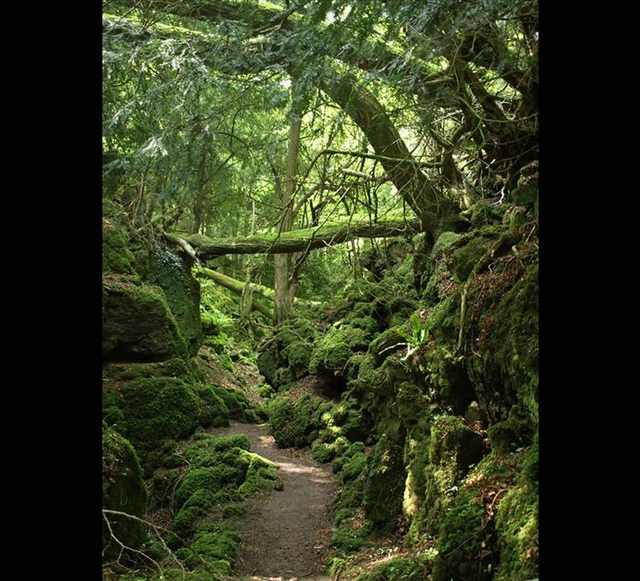 puzzlewood forest photos