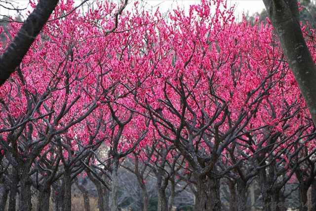 Anese Trees