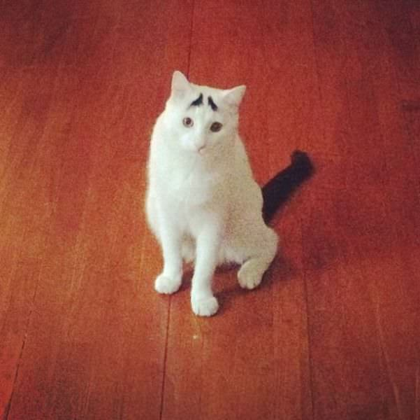 Cat With Eyebrows