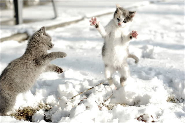 photos of cats in the snow