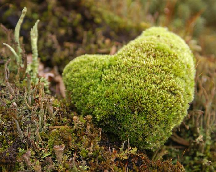 photos of natural heart shapes
