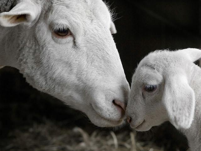 animal mother photos