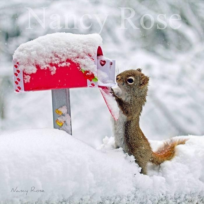 cute squirrel photos