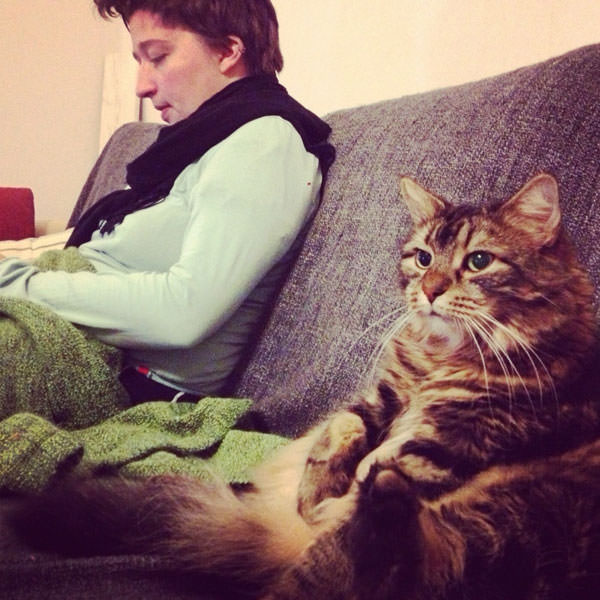 photos of friendly cats