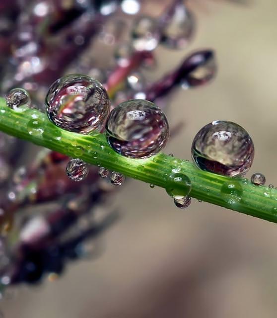 photos of beautiful drops