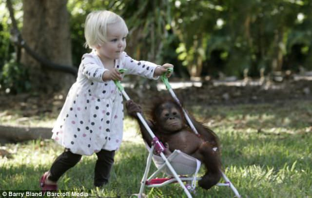 girl and chimp