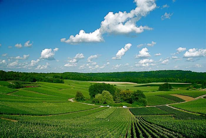 Beuatiful vineyards