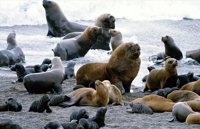 galapagos islands photos