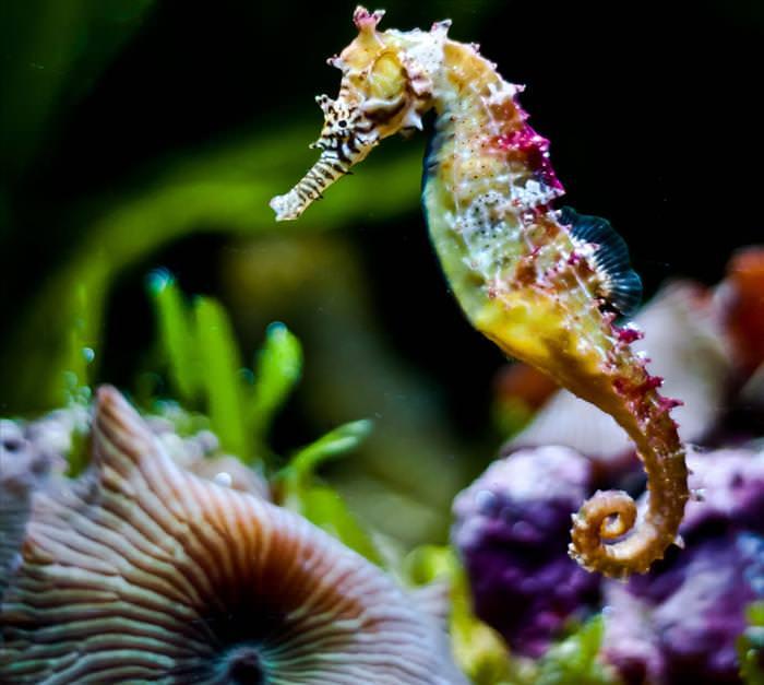 sea horses and sea dragons