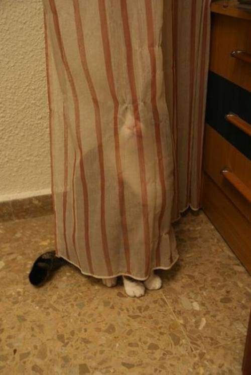 cats hide and seek