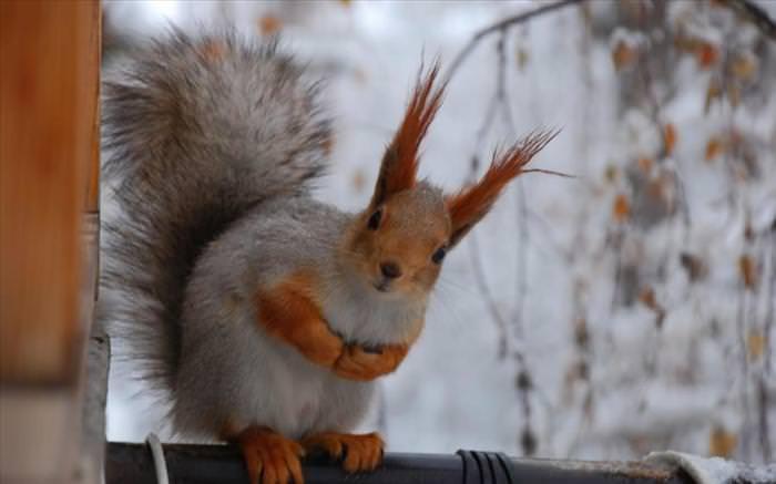 photos of squirrels